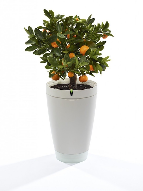 Parrot Pot, la maceta inteligente que riega tus plantas cuando no estás