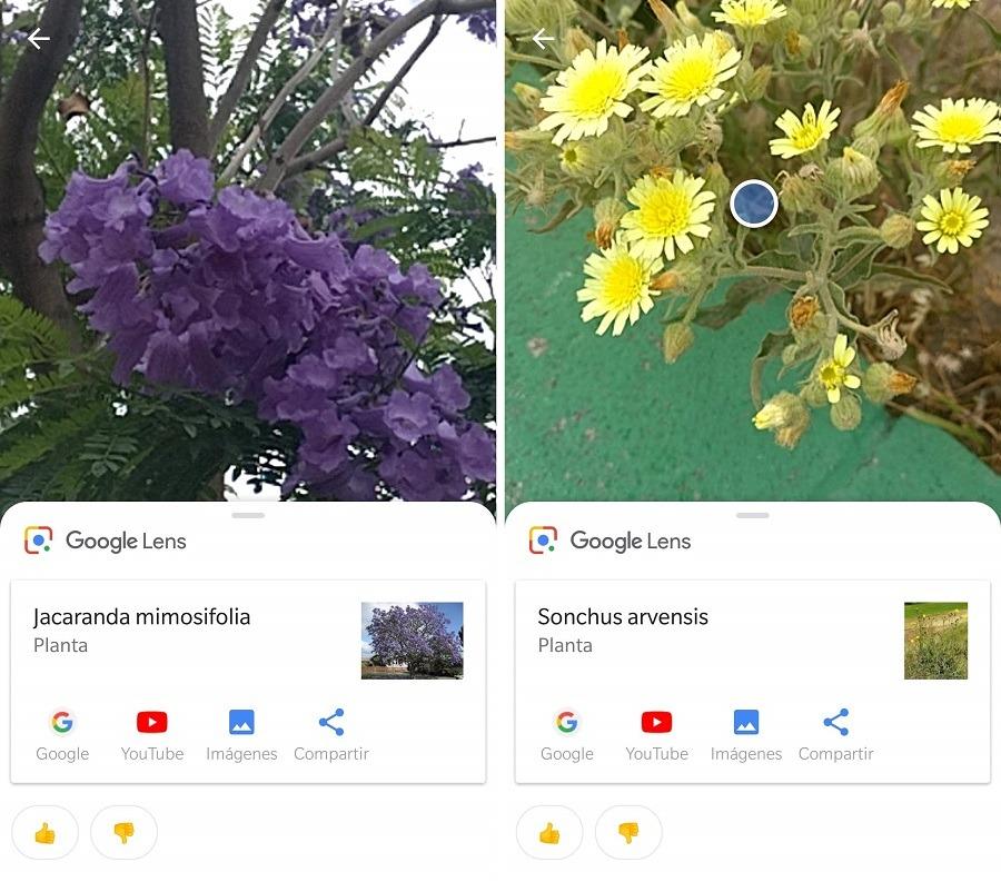 plantas-google-lens